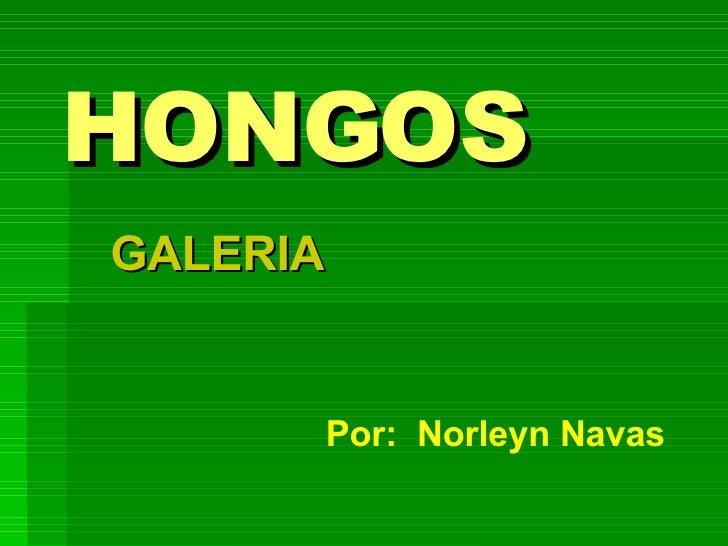 HONGOS GALERIA Por:  Norleyn Navas