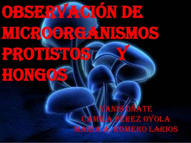 OBSERVACIÓN DEMICROORGANISMOSPROTISTOS yhongos           Yanis Oñate       Camila Pérez oyola      Maria A. romero Larios