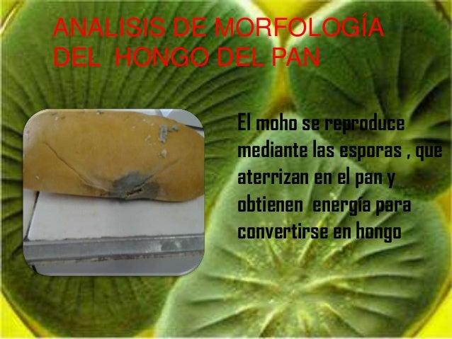 Hongos 2 - El moho es un hongo ...