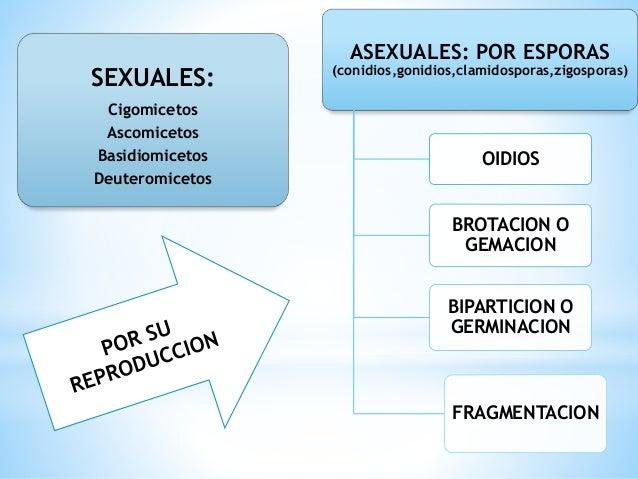 Brotacion reproduccion asexual definicion