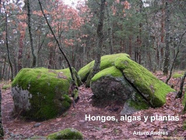 Hongos, algas y plantasArturo Andrés