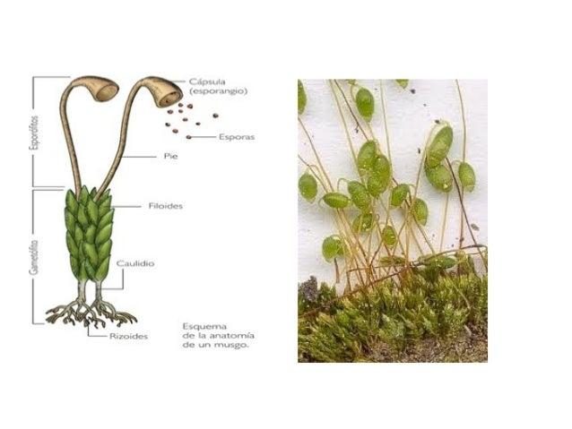 Hongos, algas y plantas