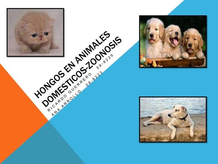 Hongos en Animalesdomesticos-ZOONOSIS<br />Ricardo guerrero   09-8229<br />Ana arrollo   09-8223<br />