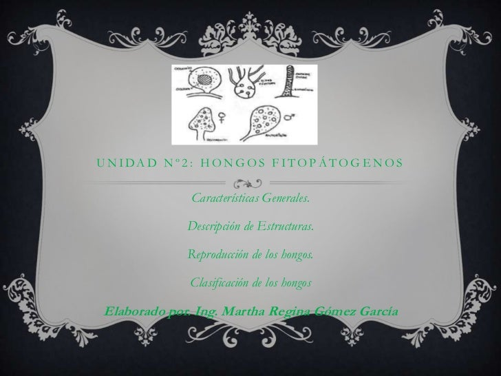 unidad Nº2: HONGOS FITOPÁTOGENOS<br />Características Generales.<br />Descripción de Estructuras.<br />Reproducción de los...