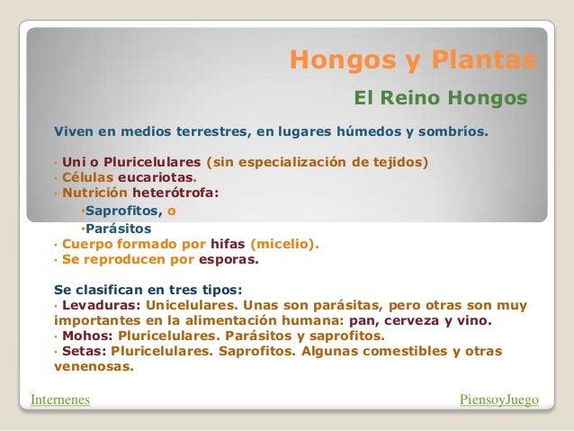 Hongos y Plantas                                               El Reino Hongos    Viven en medios terrestres, en lugares h...