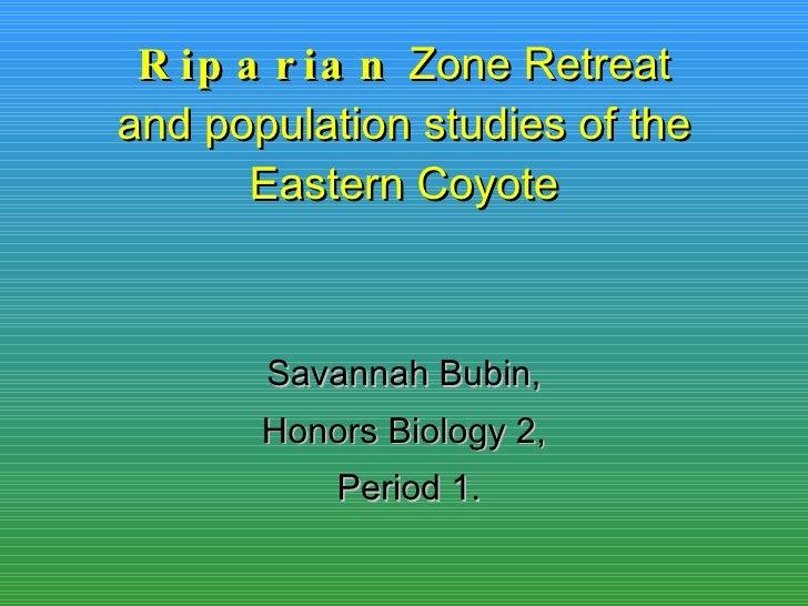 Riparian  Zone Retreat and population studies of the Eastern Coyote Savannah Bubin, Honors Biology 2, Period 1.