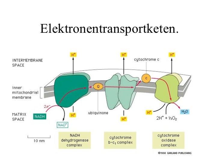 Elektronentransport