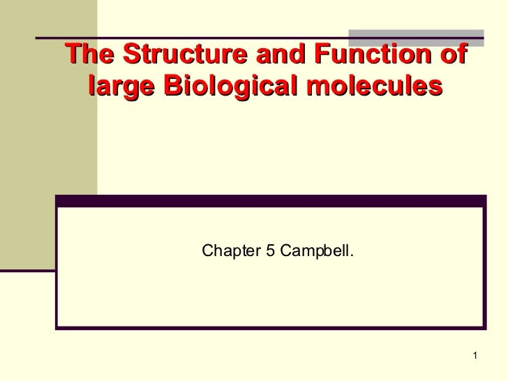 The Structure and Function of large Biological molecules Chapter 5 Campbell.