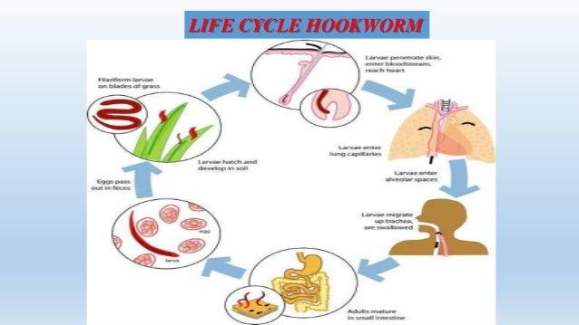 Hookworms by manoj