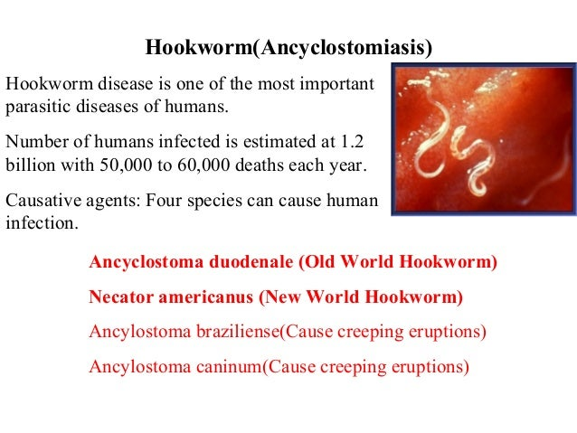 Hookworm Infection