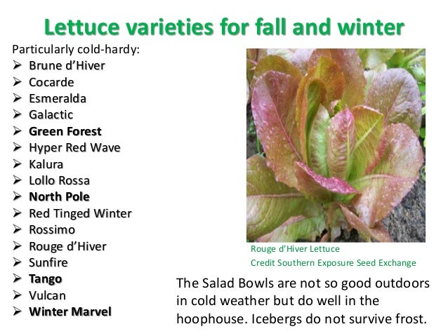 Image Gallery lettuce types list