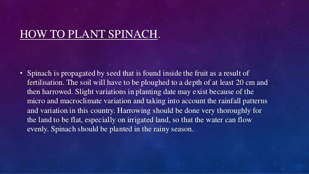 HOW TO PLANT SPINACH. • Spinach is propagated by seed that is found inside the fruit as a result of fertilisation. The soi...