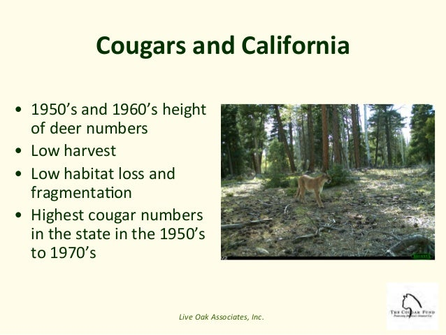 cougar conservation in the 21st century by rick hopkins. Black Bedroom Furniture Sets. Home Design Ideas