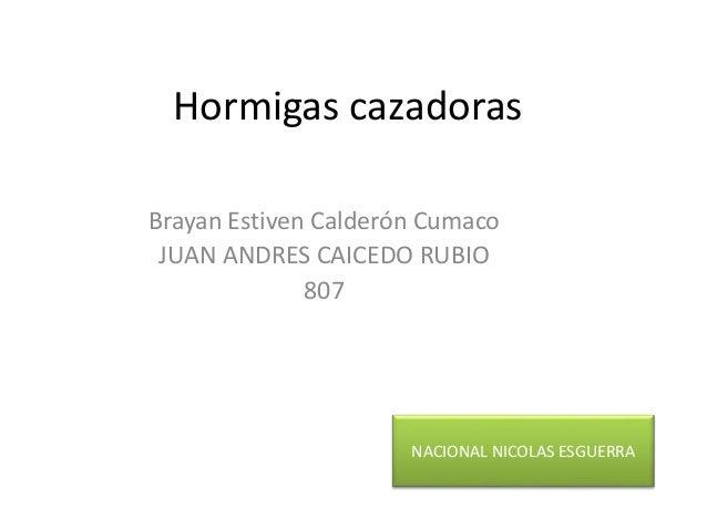 Hormigas cazadoras Brayan Estiven Calderón Cumaco JUAN ANDRES CAICEDO RUBIO 807 NACIONAL NICOLAS ESGUERRA
