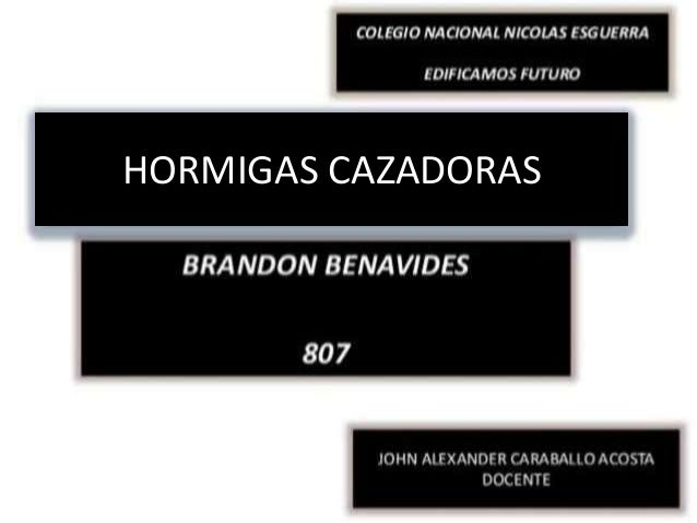 HORMIGAS CAZADORAS