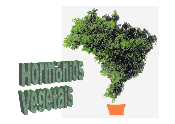 Fitormônios Hormônios Vegetais = Fitormônios                                       Células Produtoras   - Os fitormônios s...