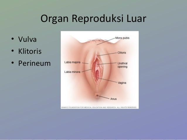 Hormon Alami Dalam Kelahiran