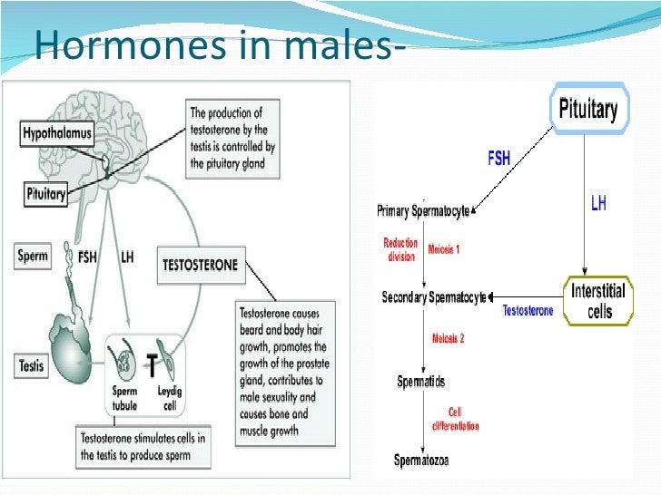 hormone secondary sex characteristics malesa in Billings