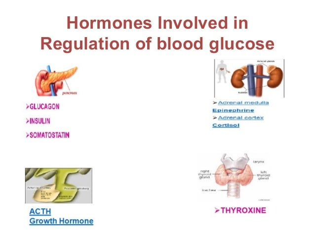which 2 endocrine glands secretes steroid hormones