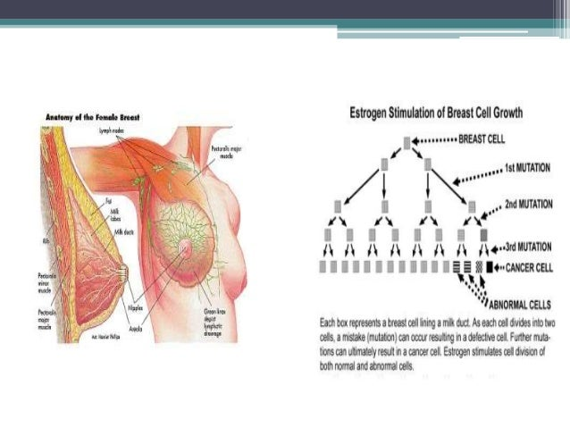 Breast development with hormones