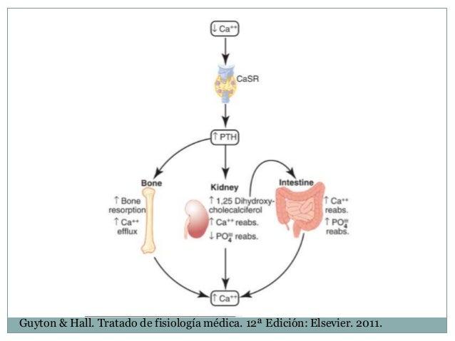 Vivir con metabolismo del hierro analitica