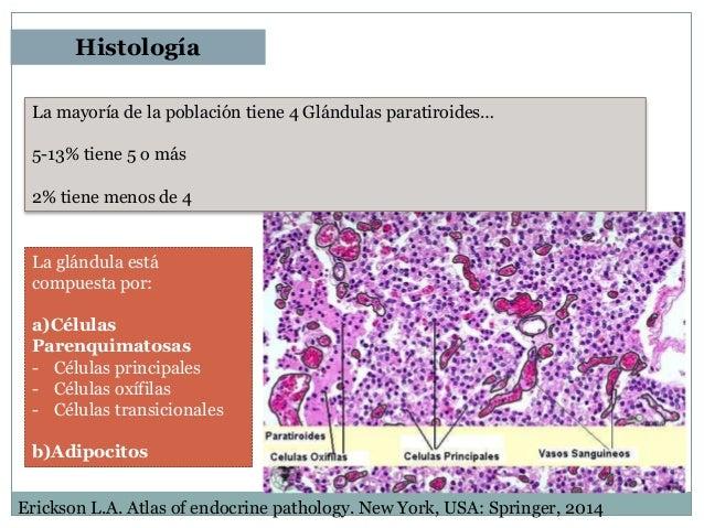 Histologia fisiologia e anatomia humana