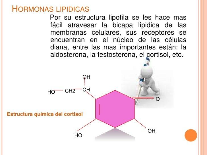 tipos de esteroides anabolicos androgenicos