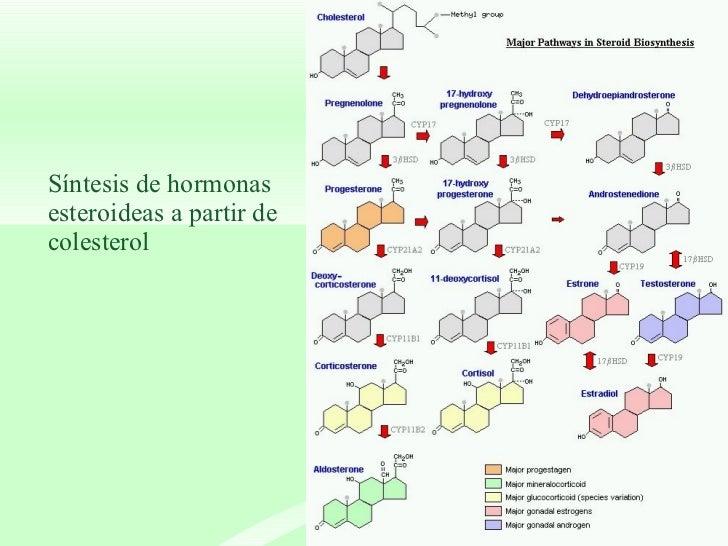 sintesis de esteroides adrenales