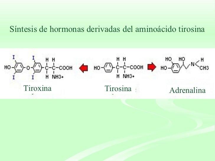 Síntesis de hormonas derivadas del aminoácido tirosina Tirosina  Tiroxina  Adrenalina