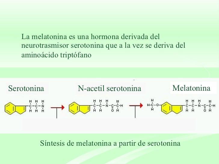 <ul><li>La melatonina es una hormona derivada del neurotrasmisor serotonina que a la vez se deriva del aminoácido triptófa...