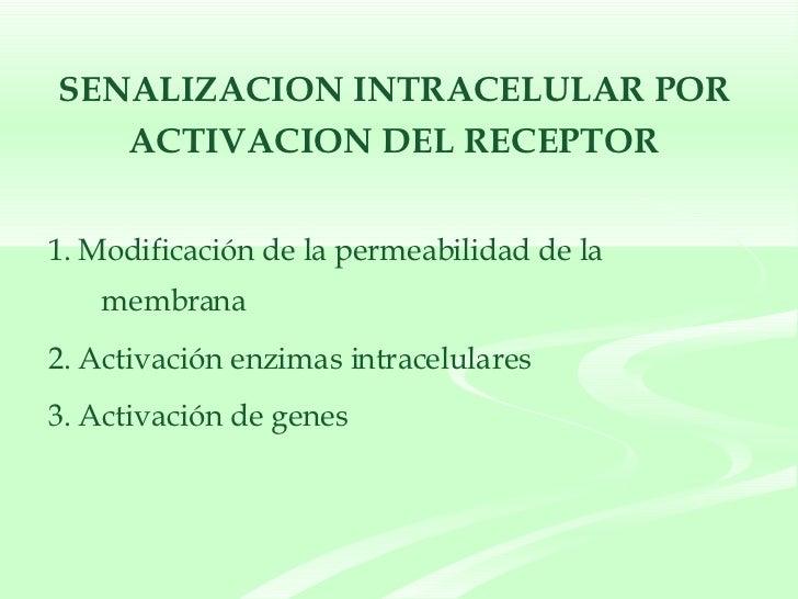 SENALIZACION INTRACELULAR POR  ACTIVACION DEL RECEPTOR   <ul><li>1. Modificación de la permeabilidad de la membrana </li><...