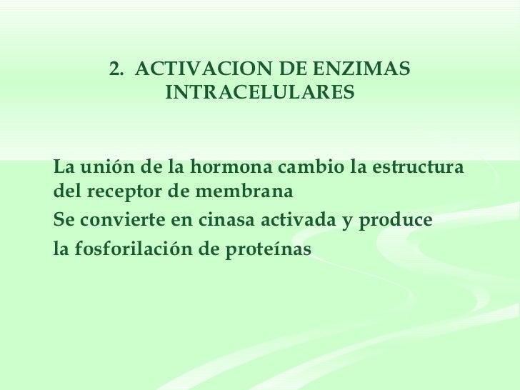 2.  ACTIVACION DE ENZIMAS INTRACELULARES <ul><li>La unión de la hormona cambio la estructura del receptor de membrana  </l...