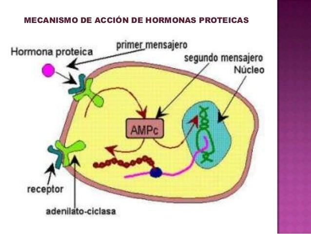 sintesis de esteroides pdf