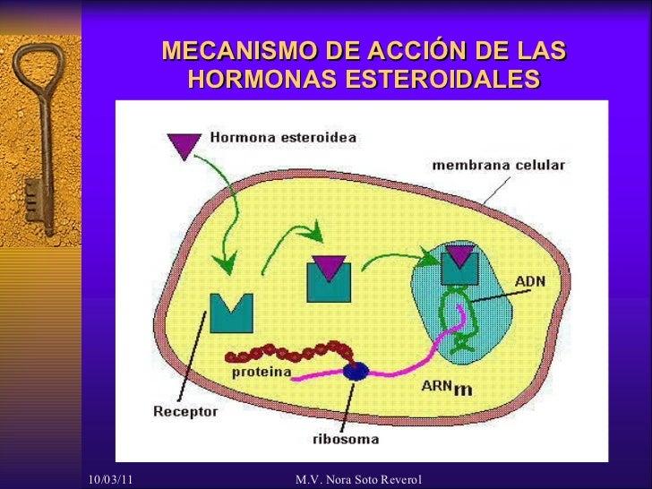 receptores esteroidales