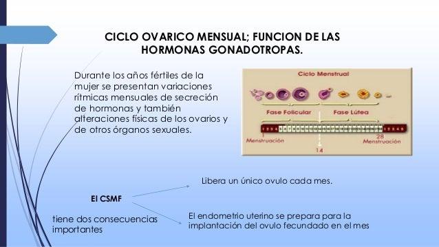 Hormonas femeninas, embarazo y lactancia