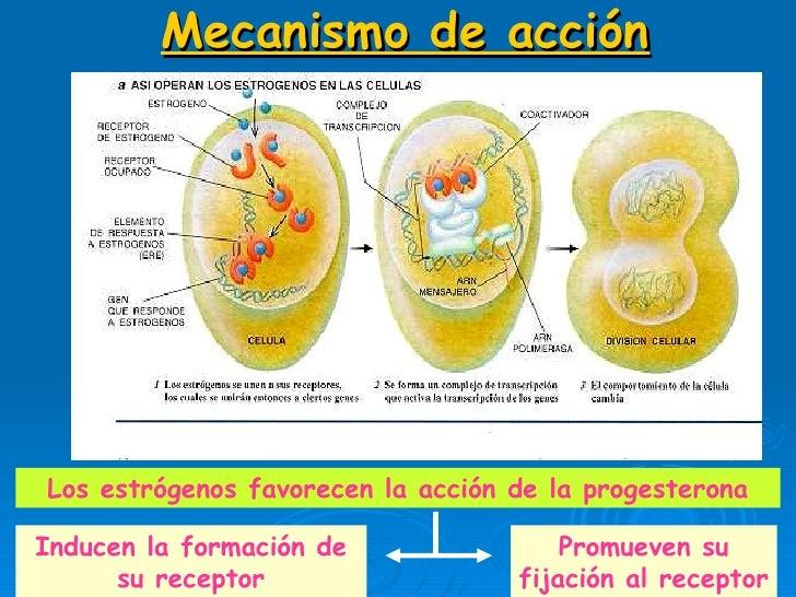 ciclo de esteroides sin resultados
