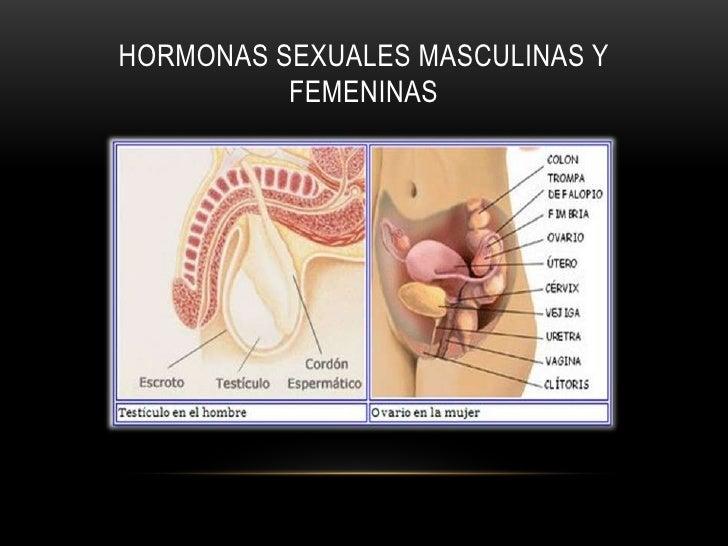 HORMONAS SEXUALES MASCULINAS Y          FEMENINAS