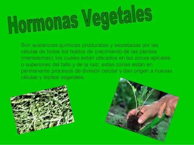 hormonas-vegetales-2-638.jpg?cb=1386858713