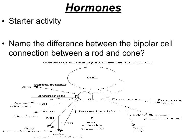 Hormones <ul><li>Starter activity </li></ul><ul><li>Name the difference between the bipolar cell connection between a rod ...