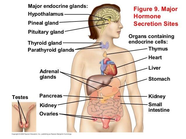 Hormones and Endocrine System