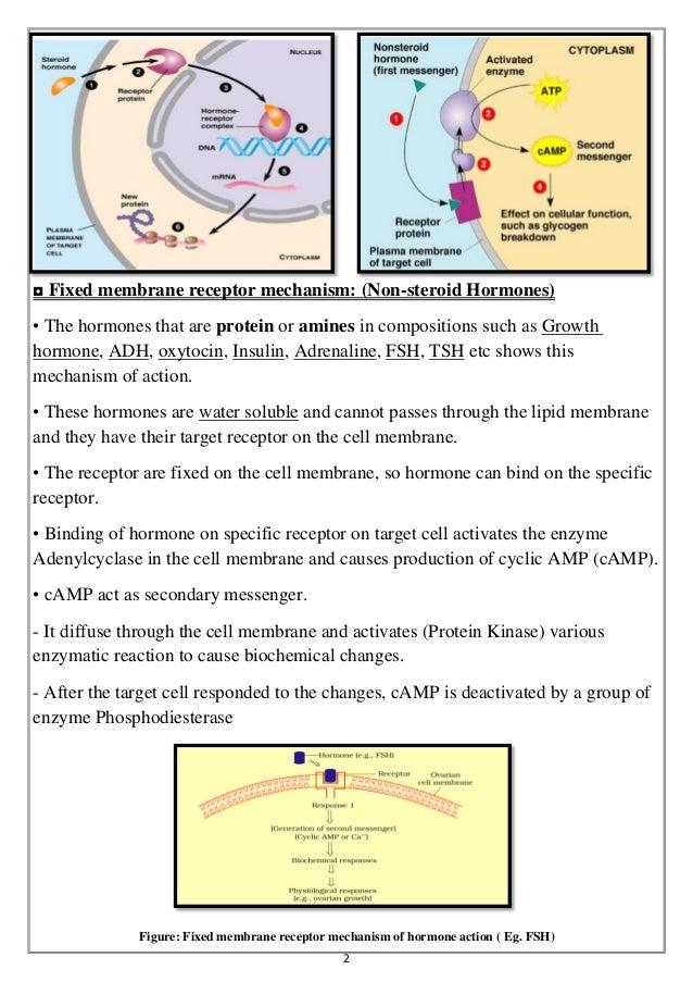 Hormones Thyroid Hormone