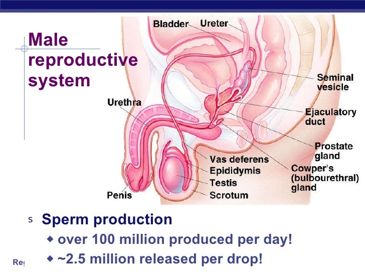 Luteinizing hormone sperm