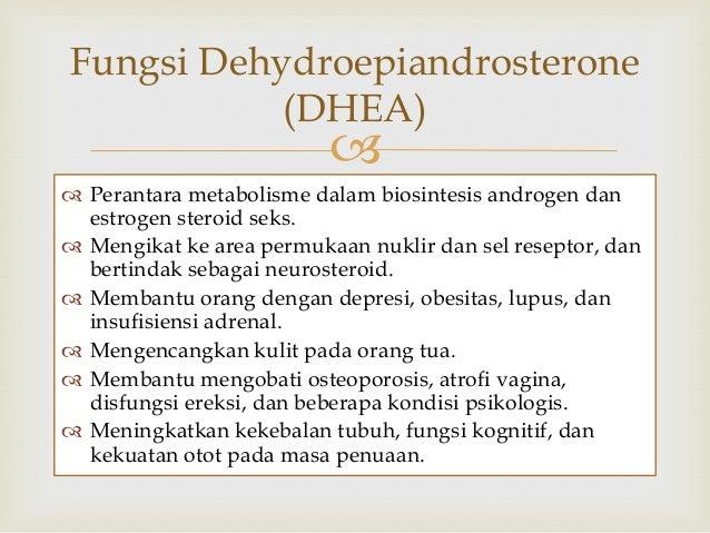 biosintesis hormon steroid