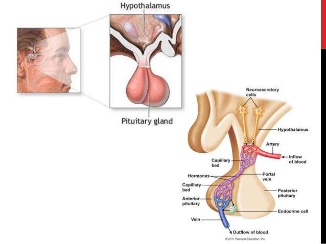 "NUSPOJAVE KORTIKOSTEROIDA: • Cushingov sindrom (""Moon-face"" – okruglo lice, ""Buffalo hump"" – odlaganje masti u gornje dije..."
