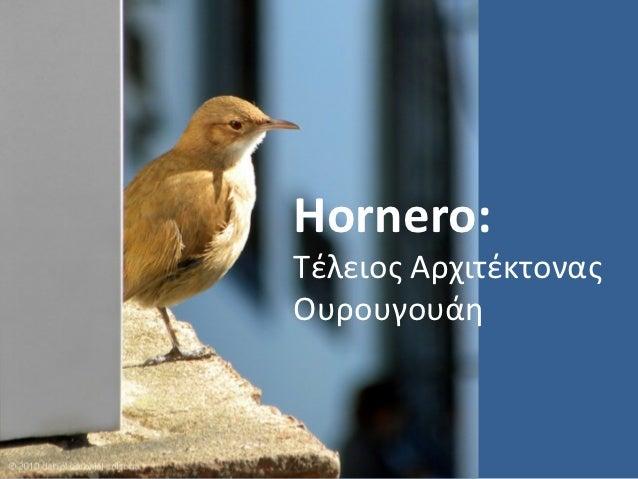 Hornero:Τέλειος ΑρχιτέκτοναςΟυρουγουάη