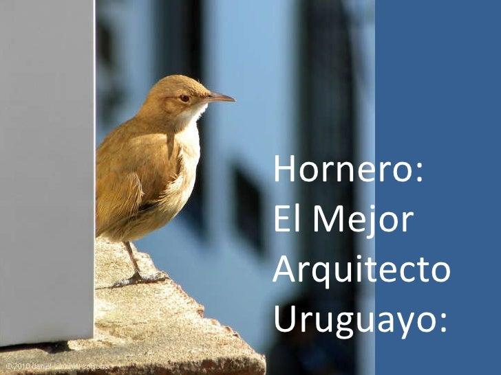 Hornero: El Mejor Arquitecto  Uruguayo:
