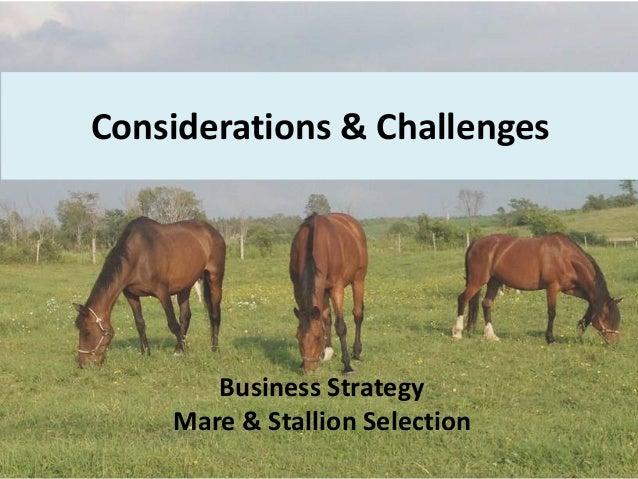 A Sample Horse Breeding Farm Business Plan Template