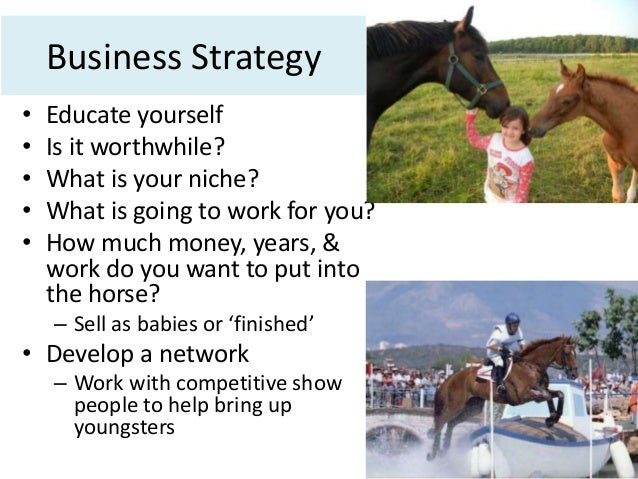 Horse breeding business plans