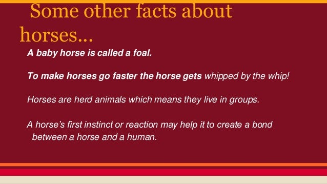Horse facts presentation-estelle&liezl 287