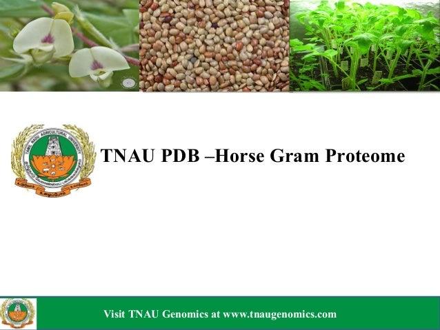 TNAUPDB–HorseGramProteomeVisit TNAU Genomics at www.tnaugenomics.comVisitTNAUGenomicsatwww.tnaugenomics.com